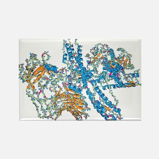 Botulinum toxin - Rectangle Magnet (10 pk)