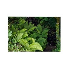 Ferns by a stream - Rectangle Magnet (10 pk)