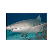Lemon shark - Rectangle Magnet (10 pk)