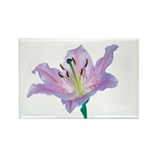 Lily (Lilium sp.) - Rectangle Magnet (10 pk)