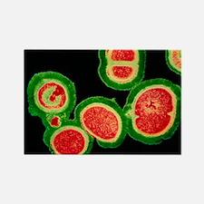 coccus bacteria - Rectangle Magnet (10 pk)