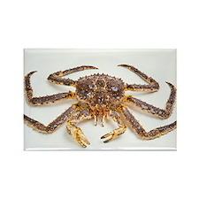 Red king crab - Rectangle Magnet (10 pk)