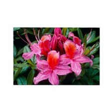 Rhododendron 'Fanny' - Rectangle Magnet (10 pk)