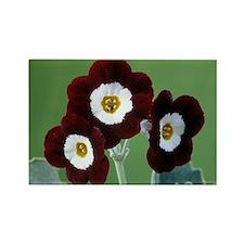 Elvet' flowers - Rectangle Magnet (10 pk)