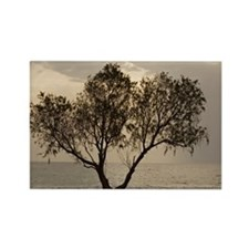 Tamarisk tree - Rectangle Magnet (10 pk)
