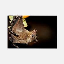 Egyptian rousette bat - Rectangle Magnet (10 pk)