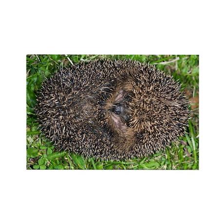 European hedgehog - Rectangle Magnet (10 pk)