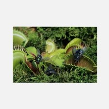 Venus flytrap - Rectangle Magnet (10 pk)