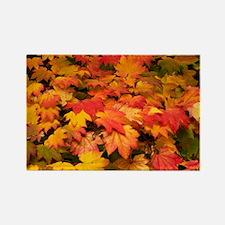 itifolia) leaves - Rectangle Magnet (10 pk)