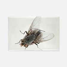 Common house fly - Rectangle Magnet (10 pk)