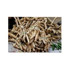Horseradish roots - Rectangle Magnet (10 pk)