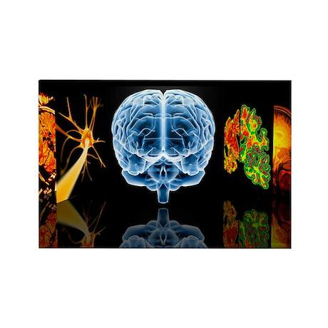 Neurology - Rectangle Magnet (10 pk)