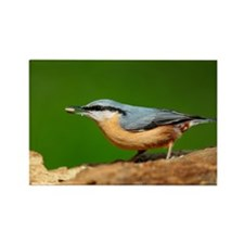 Nuthatch - Rectangle Magnet (10 pk)