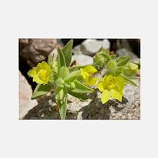 Mohavea breviflora - Rectangle Magnet (10 pk)
