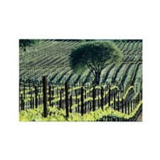 Vineyard - Rectangle Magnet (10 pk)