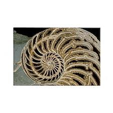 ll - Rectangle Magnet (10 pk)
