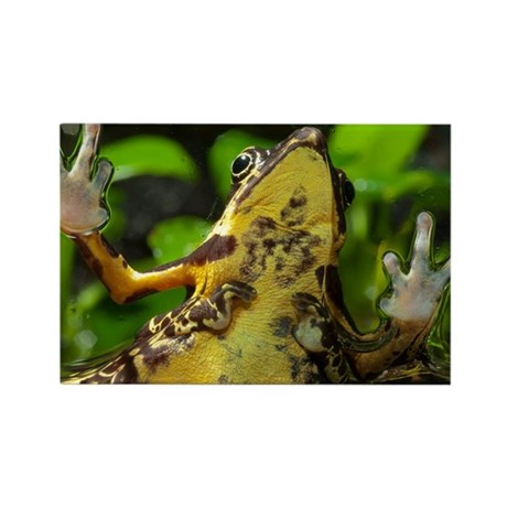 Harlequin toads mating - Rectangle Magnet (10 pk)