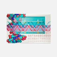 DNA analysis - Rectangle Magnet (10 pk)
