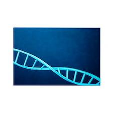 DNA helix - Rectangle Magnet (10 pk)