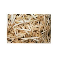 Mung bean sprouts - Rectangle Magnet (10 pk)