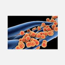 RSA bacteria - Rectangle Magnet (10 pk)