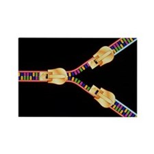 replication - Rectangle Magnet (10 pk)