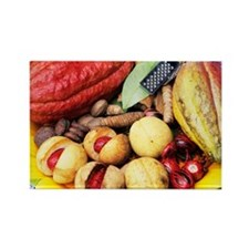 Cocoa pods and nutmeg - Rectangle Magnet (10 pk)