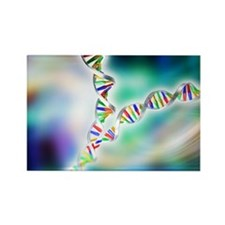 DNA replication - Rectangle Magnet (10 pk)
