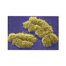 Human chromosomes, SEM - Rectangle Magnet (10 pk)