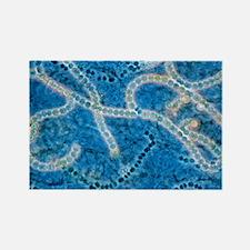 Blue green algae - Rectangle Magnet (10 pk)