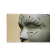 Phrenology head - Rectangle Magnet (10 pk)