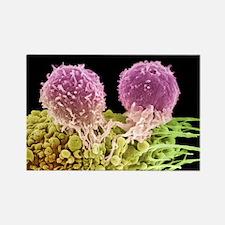 r cell, SEM - Rectangle Magnet (10 pk)