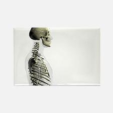 Upper body skeleton - Rectangle Magnet (10 pk)