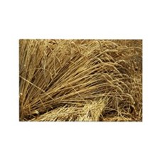 Wheat sheaves - Rectangle Magnet (10 pk)