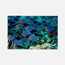 Blue tang shoal - Rectangle Magnet (10 pk)