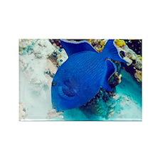 Blue triggerfish - Rectangle Magnet (10 pk)