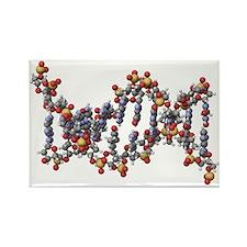 DNA molecule, artwork - Rectangle Magnet (10 pk)