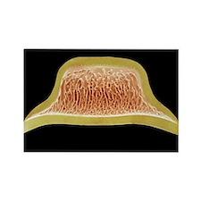 Diatom, SEM - Rectangle Magnet (10 pk)