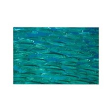 Herring shoal - Rectangle Magnet (10 pk)