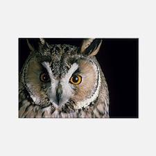 Long-eared owl - Rectangle Magnet (10 pk)