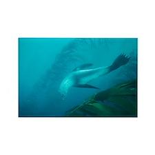 Southern fur seal - Rectangle Magnet (10 pk)