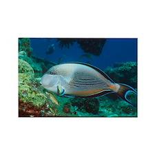 Sohal surgeonfish - Rectangle Magnet (10 pk)