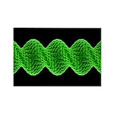 ular model - Rectangle Magnet (10 pk)