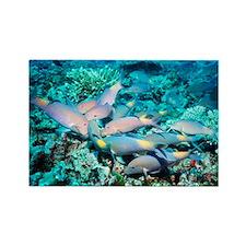 Yellowsaddle goatfish - Rectangle Magnet (10 pk)