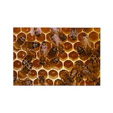 Worker honeybees - Rectangle Magnet (10 pk)