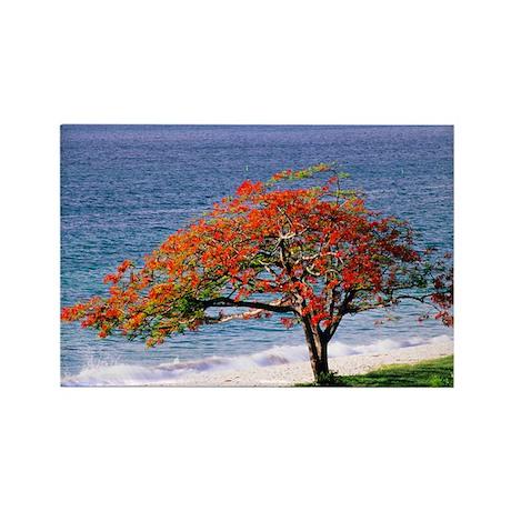 Flamboyant tree - Rectangle Magnet (100 pk)