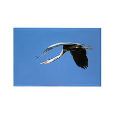 Grey heron flying - Rectangle Magnet (100 pk)