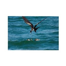 blue-footed booby - Rectangle Magnet (100 pk)