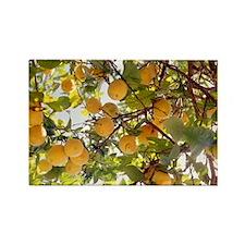 Lemons - Rectangle Magnet (100 pk)