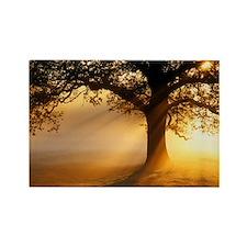Oak tree at sunrise - Rectangle Magnet (100 pk)